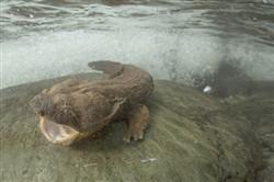 Photo Courtesy Of Usda And Freshwaters Illustrated/Dave Herasimtschuk