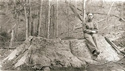Stump of a large tulip poplar tree cut by Little River Lumber Company on Lynn Camp Prong. Photo by Jim Shelton in 1926. -- Photograph Courtesy Of The National Park Service Archives